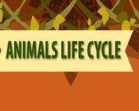 ftrd-animallifecycle